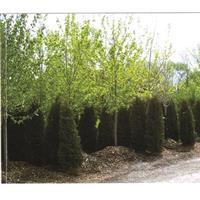 $50 For $100 Toward Trees & Shrubs