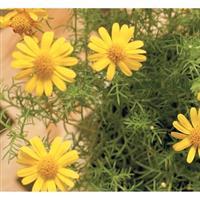 $10 For $20 Toward Flowers & Garden Supplies