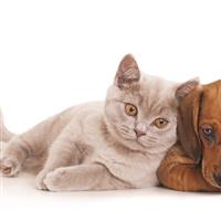 $15 For $30 Toward Pet Products & Grooming 137816
