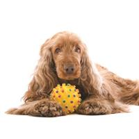 $15 For 2 In-Store Do-It-Yourself Dog Washes (Reg. $30) 156706