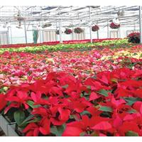 Image of $10 For $20 Toward Flowers & Garden Supplies