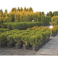 $25 For $50 Toward Nursery & Garden Offerings