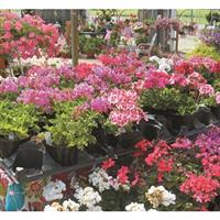 Image of $15 For $30 Toward Any Greenhouse Or Garden Center Purchase